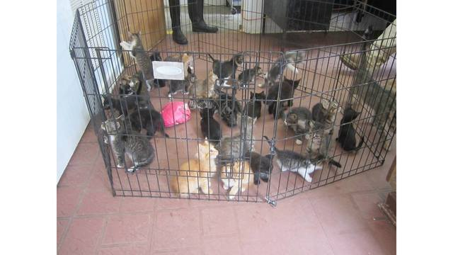 Ozark Animal Shelter offering pet of your choice for donation or cleaning supplies