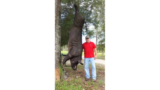 BBCI: Alabama man shoots huge wild boar in his front garden