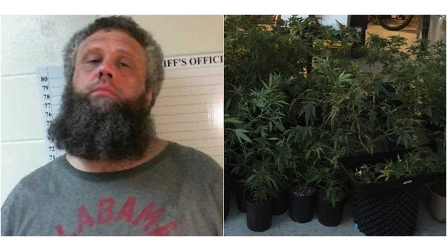 Dale County Sheriff's Office Confiscates More than 70 Marijuana Plants in Skipperville