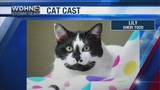 Wake Up Wiregrass: Cat Cast Starring Lily!